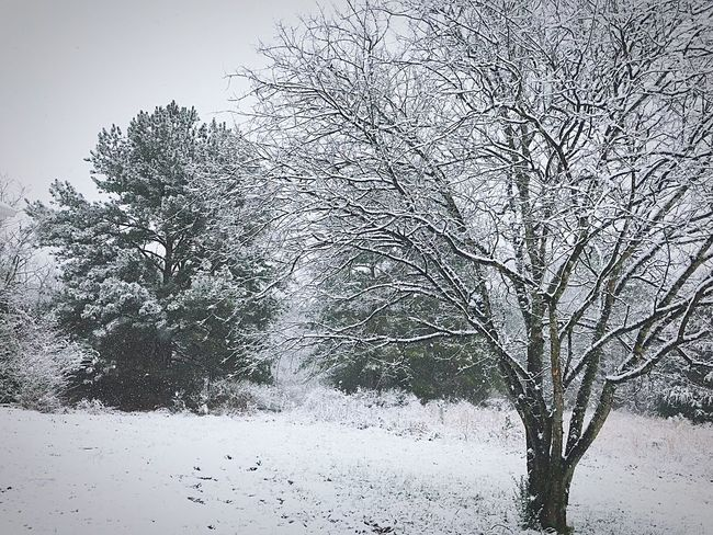 Winter Snow Cold Temperature Tree Nature Beauty In Nature No People