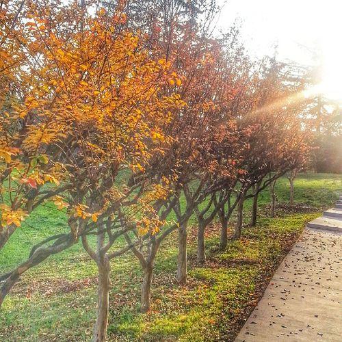 Degrade bizim isimiz!🍁🍂🍃😉Instagramturkey Ig_eurasia Ig_turkey Ig_today Igturkey Ig_sharepoint Landscapestylesgf Sizinkareleriniz Fall Autumn Naturelovers Nature_shooters Nature