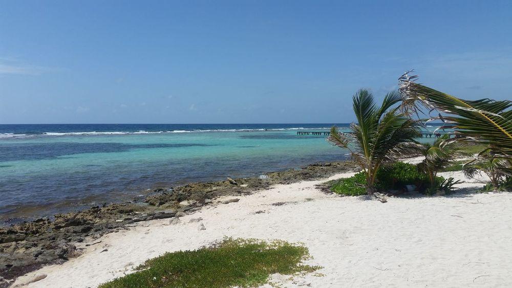 Playa, mar, arena, palmeras, sol, familia