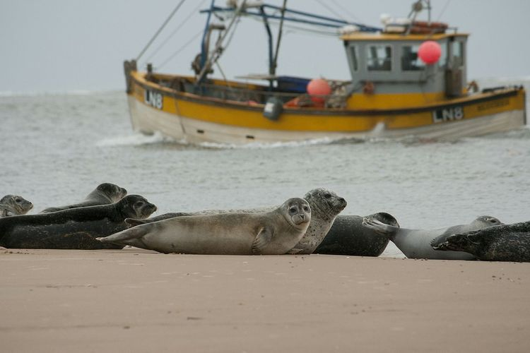 Seals Boat Wells-next-the-Sea Norfolk Coast Beach EyeEm Nature Lover The Great Outdoors - 2015 EyeEm Awards