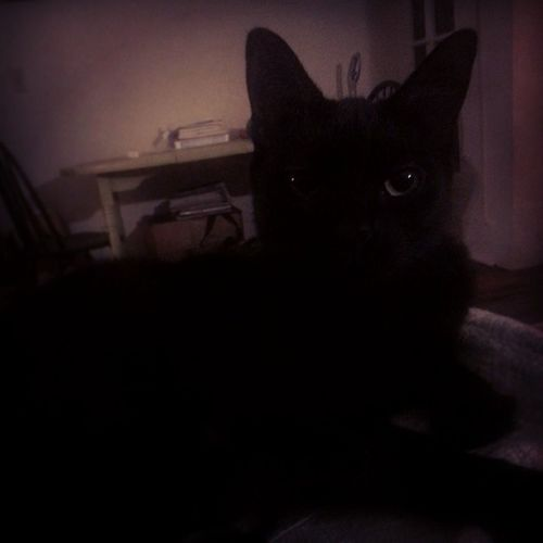 Welcome back to Instagram. Here's my cat. Shadowkitty Itlurksinthenight Monster Cat