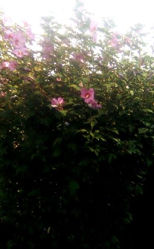 Plant of flower Flower Cuore❤ Sole...☀ Sky Nature Plant Beauty In Nature Person Calm Tranquility Farm Abbagliare Del Sole Men