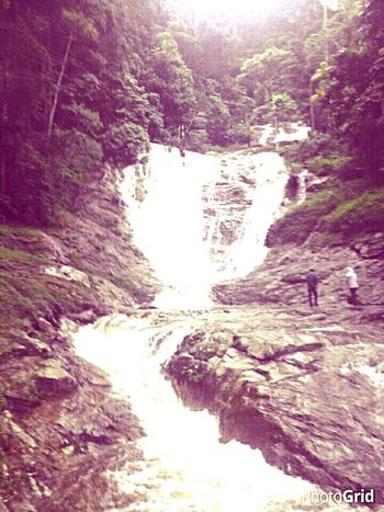 Tree Water River Forest Waterfall Geology Rock