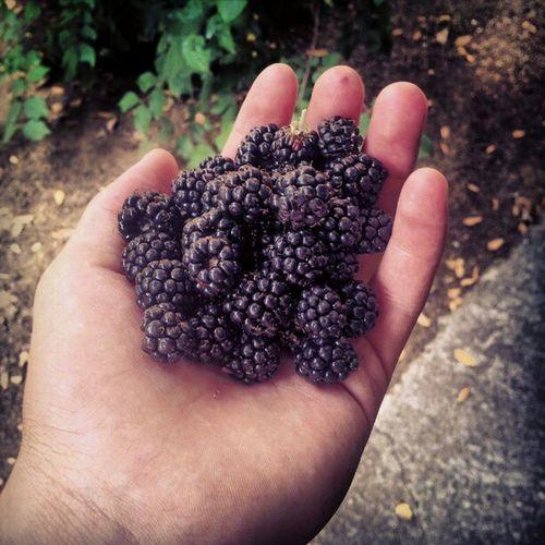 Blackberry Bogurtlen