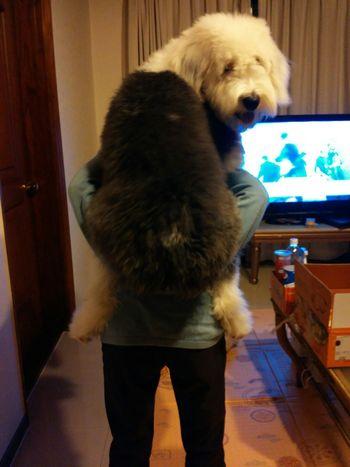 I Love My Dog 엄마등에 엎혀있는 니키