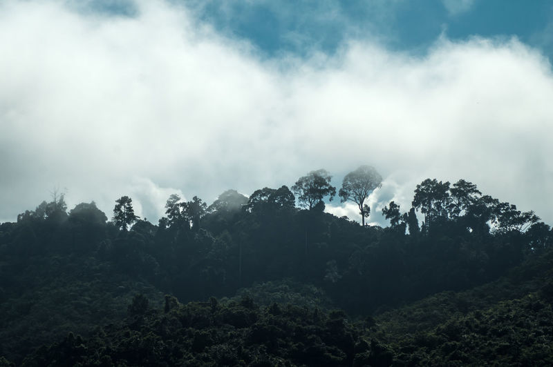 Borneo Beauty In Nature Cloud - Sky Day Environment First Eyeem Photo Fog Foliage Forest Land Mountain Mountain Peak Nature No People Non-urban Scene Outdoors Plant Rainforest Scenics - Nature Sky Tranquil Scene Tranquility Tree