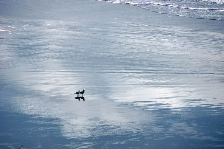 Reflections... Nature Water Reflections Animal Animal Themes Animal Wildlife Animals In The Wild Beach Beauty In Nature Clouds Day High Angle View Leisure Activity Motion Nature Outdoors Reflection Scenics Scenics - Nature Sea Seagull Sport Unrecognizable Person Vertebrate Water Waterfront