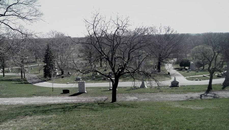 Cemetery Tree Crown Hill