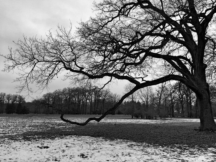 Big Tree | Tree Nature Bare Tree Outdoors Beauty In Nature No People Tranquility Day Landscape Potsdam Park Sanssouci Black And White Nature Winter Cold Temperature Bnw_collection Schwarz & Weiß Winter Trees Bäume Landscape_Collection Natur Schnee Snow Blackandwhite Frost Schwarzweiß