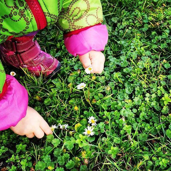 Was gibt es schöneres als Blumenpflücken am 27.12....