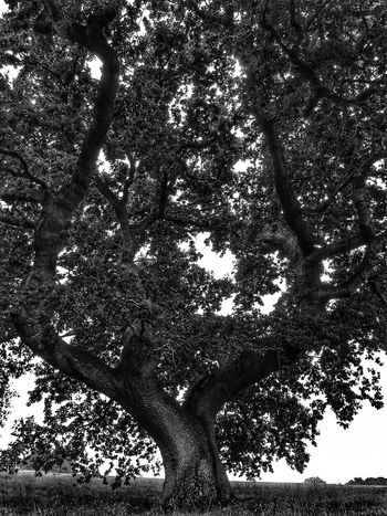 Dark Photography Darkart The Black Lens Black&white Black & White Black And White Nature TreePorn