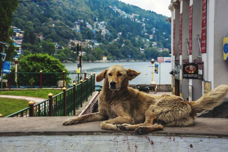 Dog relaxing on railing in city