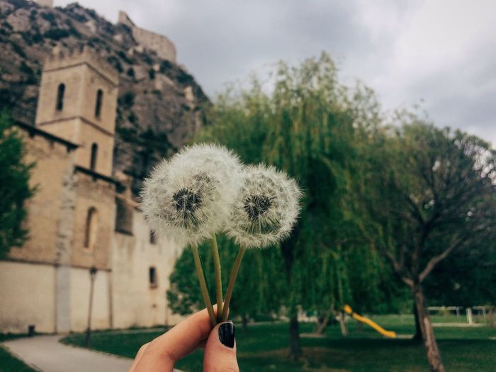 Close-up of hand holding dandelion against sky