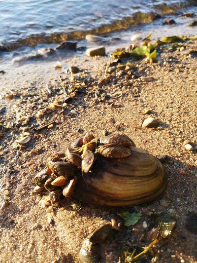 Lithuania Nature žiegždriai žiegždrių Takas Lithuania Big Shell Small Shells Family Of Shells Water Beach Sand Low Tide Sunlight Seashell High Angle View Animal Themes Shell Animal Shell