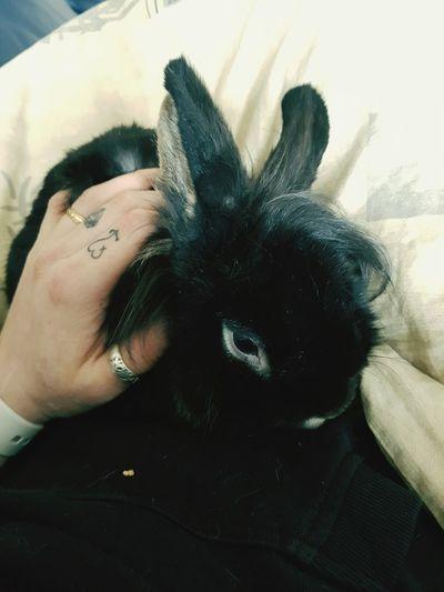 Grayemorabbit