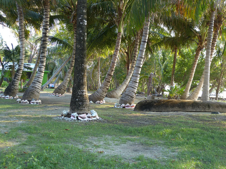 Beauty In Nature Day Growth Landscape Nature Outdoors Palm Grove Palm Trees Plant Scenics Sunlight Sunny Tourism Tranquil Scene Tranquility Travel Destinations Tree Belize  Travel Travel Photography