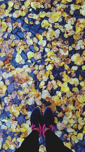 Walk in the Parc de Milan Lausanne Parc Walkinthepark Walkinthewoods Autumn Leaves Autumn Colors Nike Nikeairmax Airmax1 Naturelovers Natural Pattern Lines, Colors & Textures Nature_perfection Naturelover Healthylife