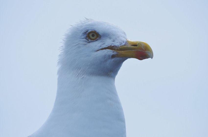 sea fishing. Sea Fishing Water Seagull Bird Wildlife Closeup