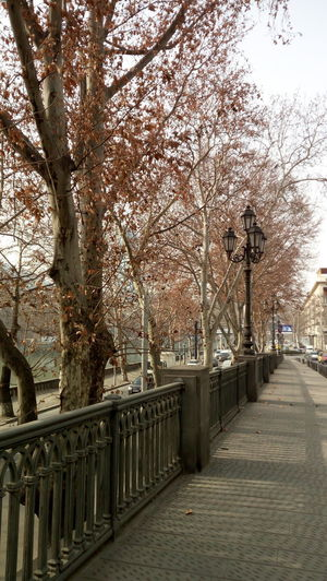 Hello World ✌ City Day Outdoors Tree Bridge - Man Made Structure Miles Away Nature Nofilternoedit Tbilisi Georgia