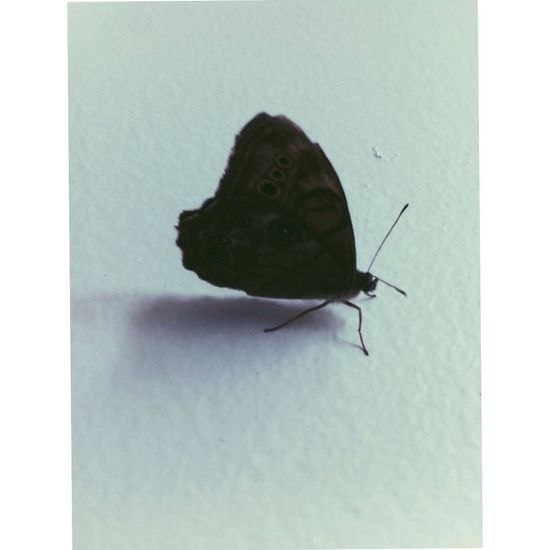 Keep your butterfly alive Butterfly Butterflyproject Mutilation Depression Nature