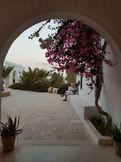 Tree Plant Indoors  Day Flower Arch Architecture Beauty History Djerba, Tunisia Sunset Museum Guellala Museum Djerba  Nature Sky Travel Destinations