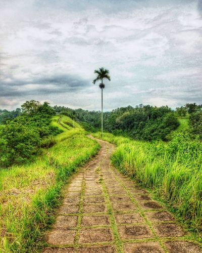 The Great Outdoors - 2016 EyeEm Awards Ubud Bali Bali, Indonesia Campuhan Ridge Walk Palm Tree Pathway Tropical Tropical Climate Travel Exploring New Ground EyeEm Best Shots Eye4photography  EyeEm EyeEm Best Edits The Week Of Eyeem EyeEm Gallery Beautiful Nature Landscapes No People Relaxing Place Landscape_Collection