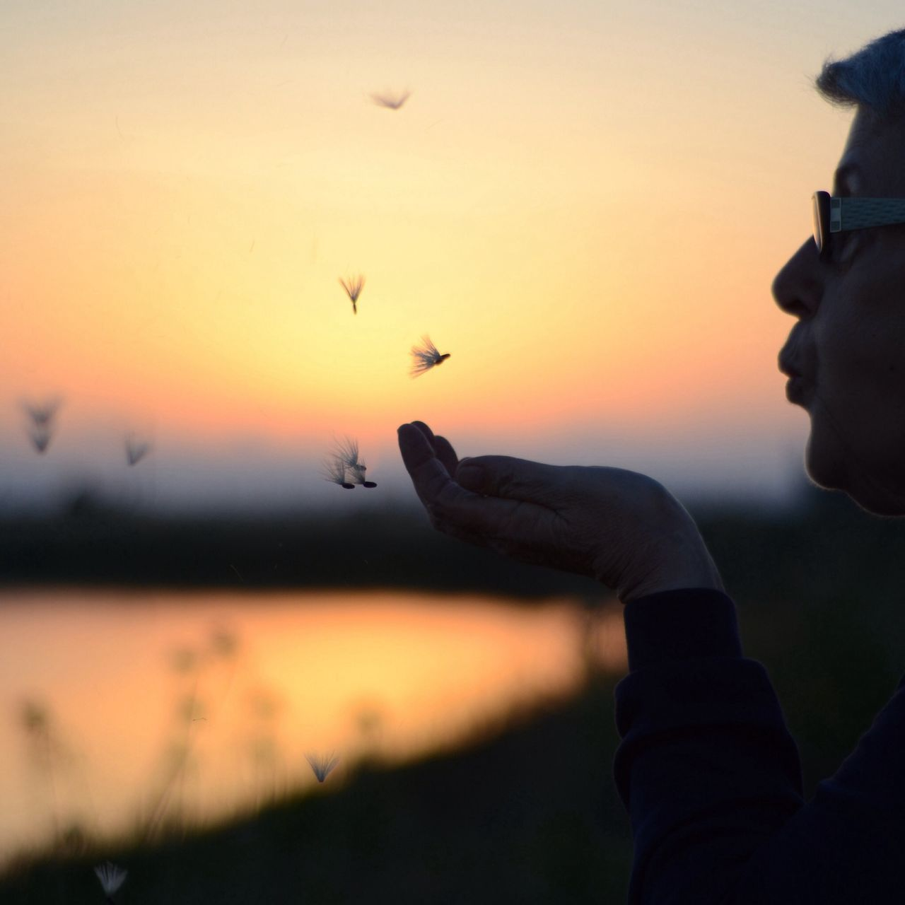 Person blowing feathers against sky during sunset