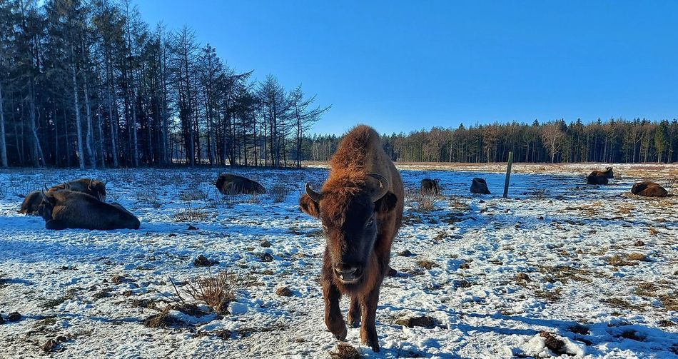 View of horse on snow covered field