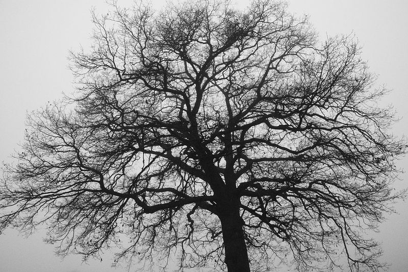 Tree Plant Branch Bare Tree Sky Low Angle View Nature Silhouette No People Tranquility Beauty In Nature Clear Sky Outdoors Day Trunk Tree Trunk Scenics - Nature Growth Autumn Spooky Tree Canopy
