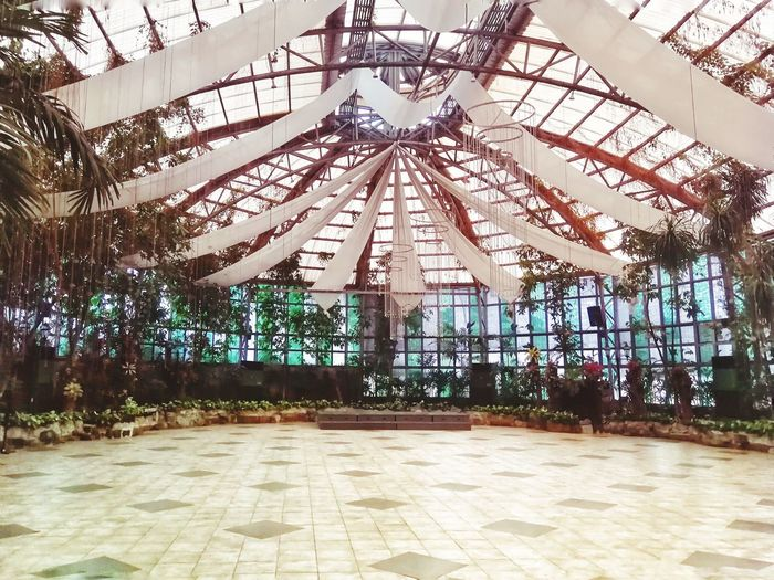 Glass Garden Glass Indoors  Indoor Photography Eventspace Phillipines Garden Tree Greenhouse