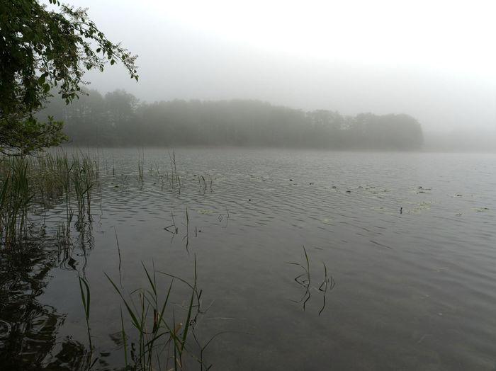 Water Fog