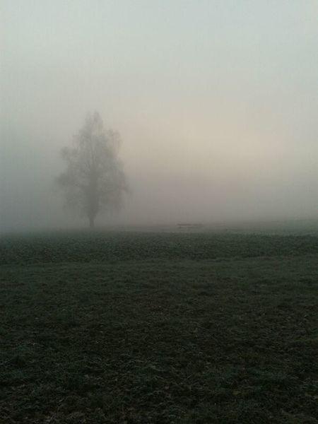Foggy FogyDay