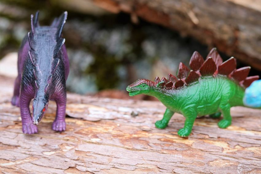 Dinosaurs Creative Play Photography Creativity Child's Play Close-up Day Dinosaur Extinct Focus On Foreground No People Not Real Outdoors Plastic Toys Representation Reptile Selective Focus Toy Toy Animal