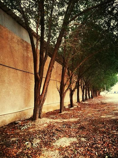Naturetrees Day Growth Kuwaitstreetphotography