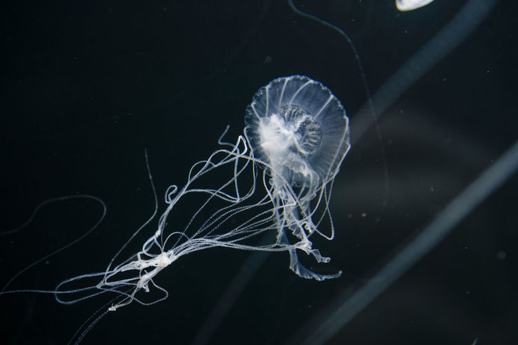 Jellyfish swimming in aquarium berlin
