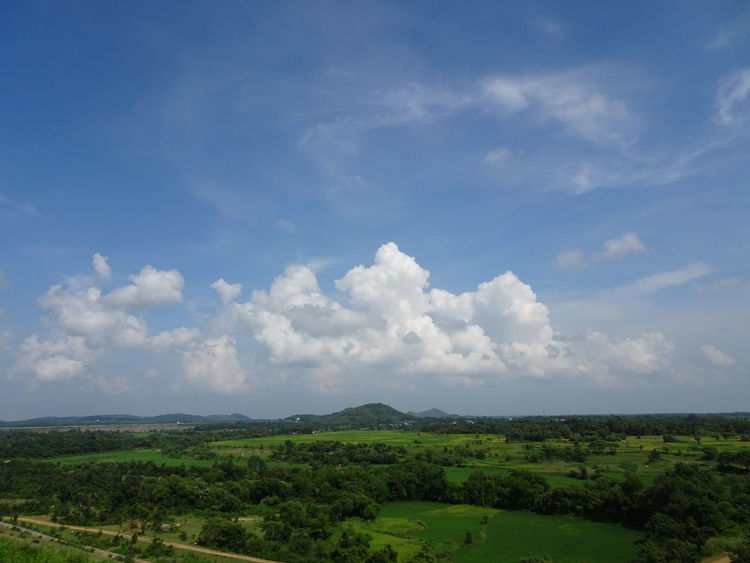 Nature Green Color India Beauty In Nature Rural India Scenics Tranquil Scene Non-urban Scene Tranquility Outdoors Day Tree Landscape Sky Top View Angle Field Road Lost In The Landscape