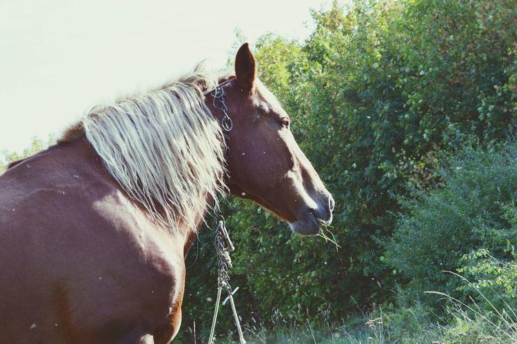 Horses Taking Photos Animals