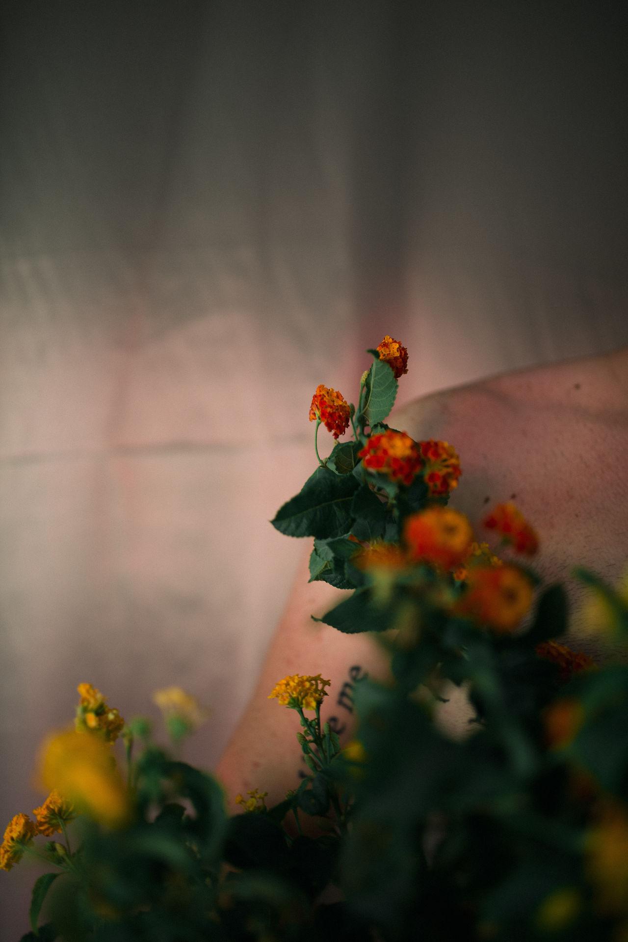 plant, flowering plant, flower, selective focus, freshness