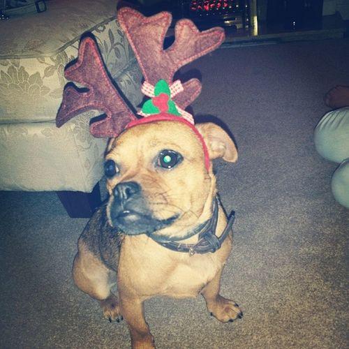 Puppyreindeer Christmas