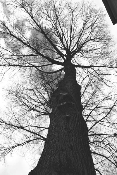 Tree Tree_collection  Tree Without Leaves Blackandwhite High Spring BIG Today Naturephotography Outside From My Point Of View Capture The Moment Taking Photos Eye4photography  Popular Photos EyeEm Gallery Eyem Best Shots Nature Photography Nature_collection Open Edit The Week On Eyem Showcase March Zwickau Naturelovers Nature_perfection