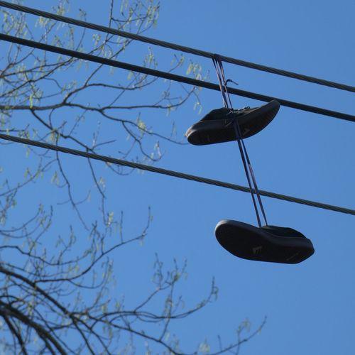 Shoeless Panasonic Lumix DMC-FZ80 Low Angle View Sky Hanging Tree Nature Clear Sky Blue