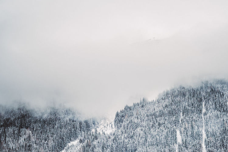 Beauty In Nature Cold Temperature Day Fog Forest Frozen Glade Landscape Mountain Nature No People Outdoors Pinaceae Pine Tree Scenics Snow Snowcapped Mountain Snowing Spruce Tree Tranquility Tree Weather Wilderness Winter WoodLand