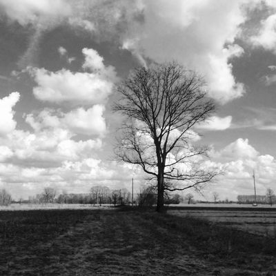 1346 Tree Bare Tree Sky Nature Tranquility No People Landscape Lone Tranquil Scene Beauty In Nature Cloud - Sky Growth Outdoors Day Branch Scenics Isolated Light And Shadow EyeEmNewHere Monochrome Blackandwhite Thegreatoutdoors-2017EyEmawards