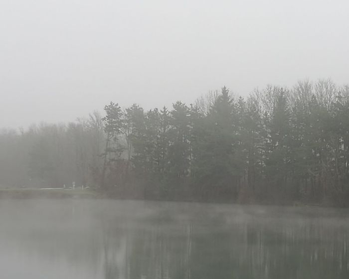 Tree Fog Winter Water Lake Dawn Autumn Cold Temperature Forest Reflection