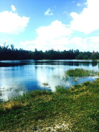 Beauty Beautiful Lake Water Nature Natural Gator Gators Alligator Tranquility Scenery Scenic