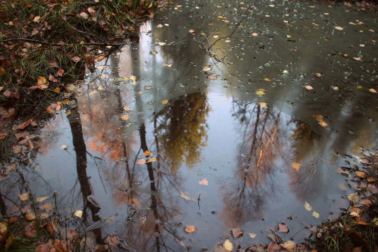 water, reflection, nature, day, puddle, rain, water pollution, high angle view, pollution, outdoors, no people, lake, wet, environment, plant, leaf, environmental issues, plant part, rainy season, leaves, shallow