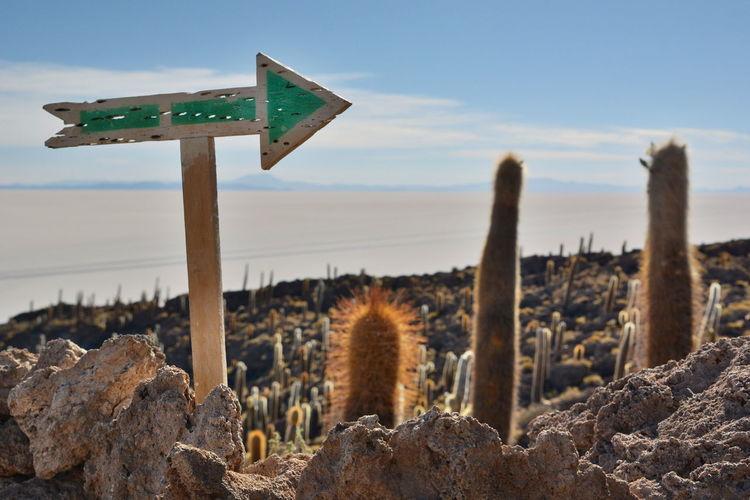 Isla Incahuasi. Salar de Uyuni. Chile Andes Andes Mountains Arrow Arrow Sign Beauty In Nature Bolivia Cacti Cacti Garden Cactus Cactus Garden Desert Eyeem Bolivia Incahuasi Isla Incahuasi Landscape Nature No People Outdoors Salar De Tunupa Salar De Uyuni Scenics Travel Destinations Uyuni Uyuni Salt Flat Miles Away