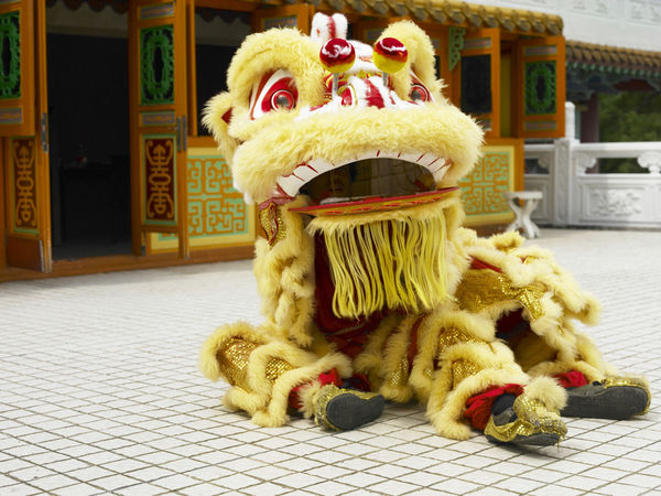 yellow lion dance at temple Celebration Gong Xi Fa Cai Good Luck Lion Dancers Lion Dance Performance Traditional Culture Animal Representation Art And Craft Chinese Lion Chinese New Year Close-up Costume Cultures Festive Lion Dance Opening Event Performance Religious  Special Occasion Temple - Building