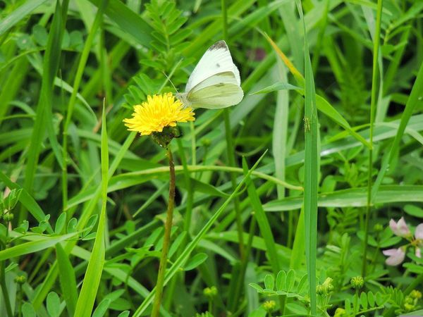 Butterfly & daisy Flower Green Color Insect Growth Nature Plant Beauty In Nature Outdoors Petal Day No People Flower Head Yellow Grass