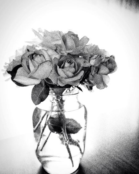 Roses In Glass Monochrome _ Collection Roses_collection Tranquility Rosen Roses Bunch Of Roses Grainy Images